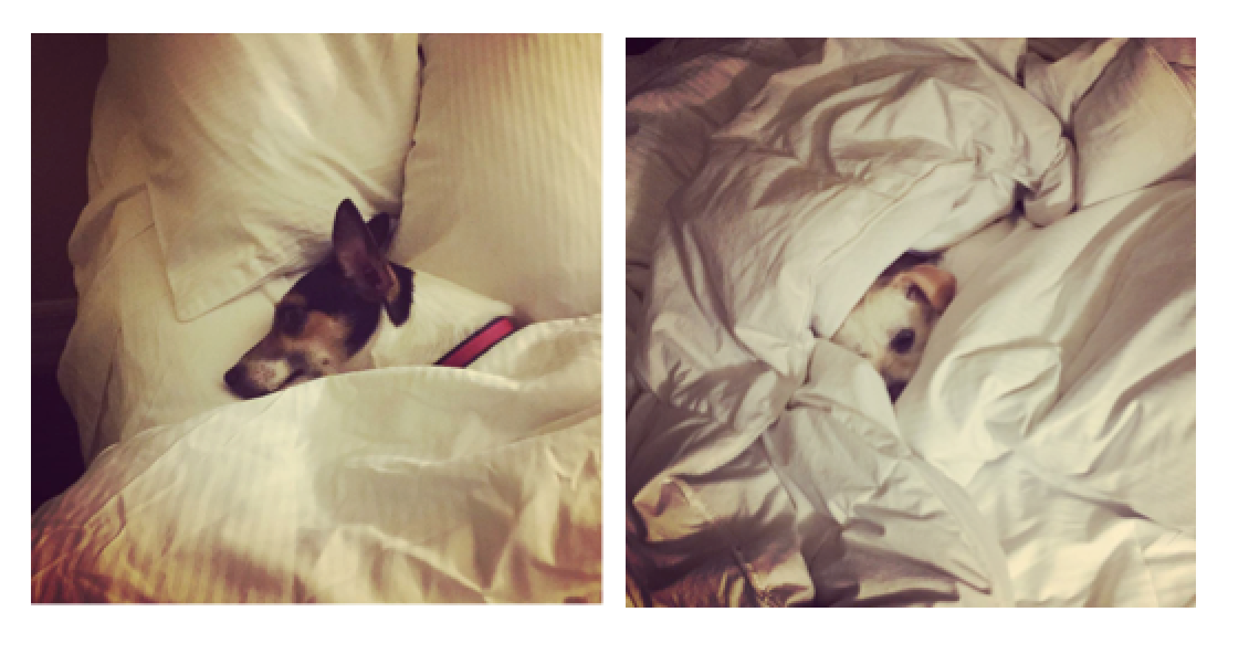 They both enjoy travel. Well, mostly they like sleeping in hotel beds.