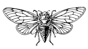 Cicada 3301 #secret societies