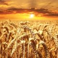 Today Is Lughnasadh: What's Working? What Isn't?