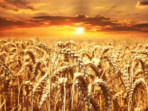 Today Is Lughnasadh: What's Working? What Isn't? #wheel of the year #semi-charmed life #how to say no