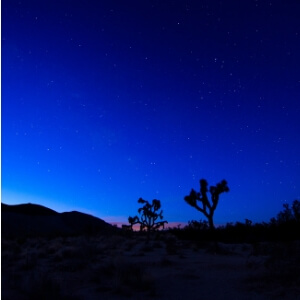 Photo of Joshua Tree National Park at night, with stars overhead.